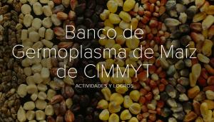 spanish maize