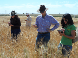 Trainees work with KDSmart phenotyping technology, one of the subjects taught in the new SeeD distance learning modules. Photo: G. Salinas/CIMMYT.